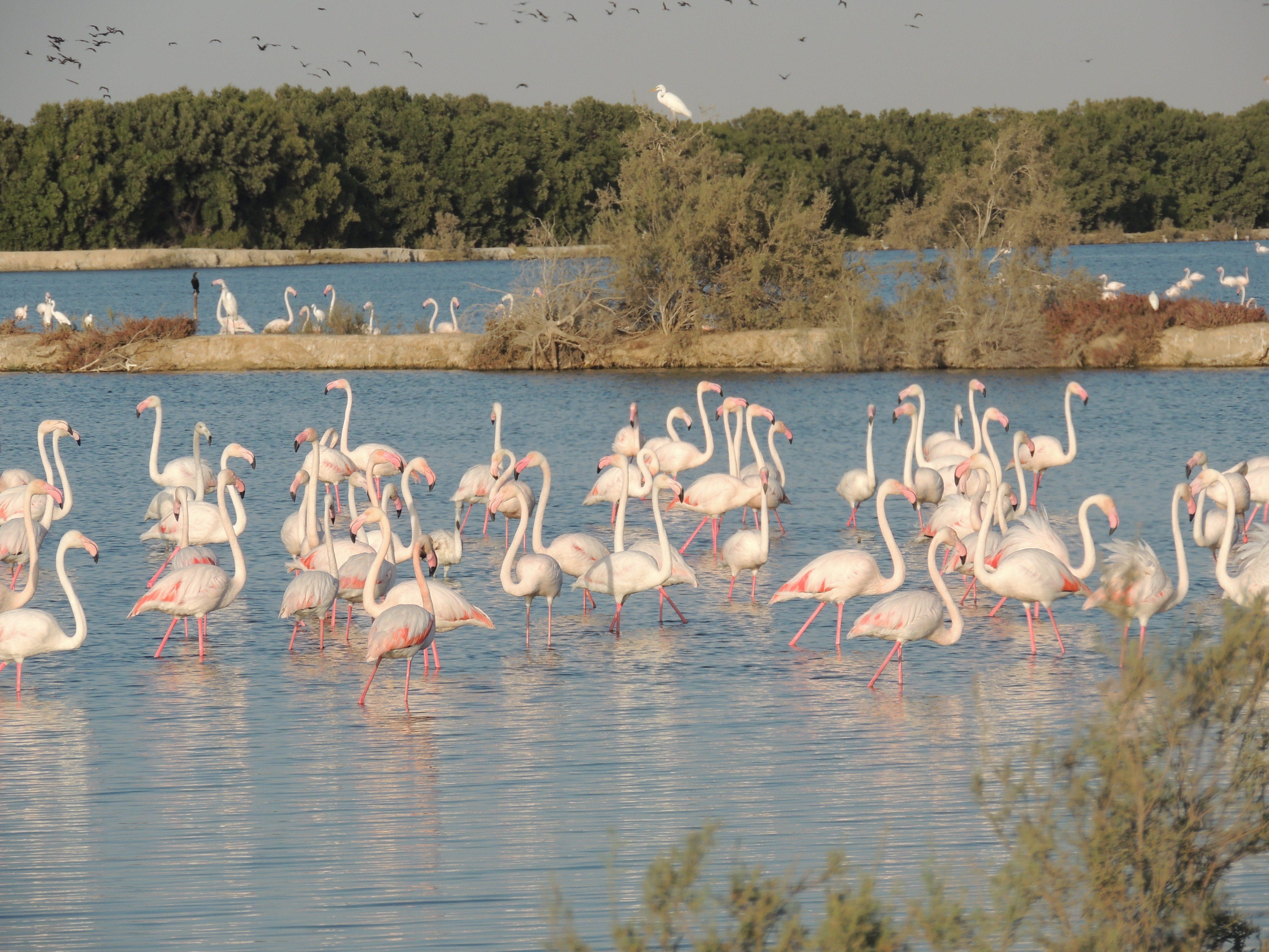 Dubai Wetland Centre - Ras Al Khor